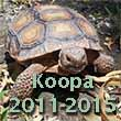 Living a nightmare - the tragic loss of my pet tortoise Koopa