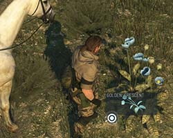 Metal Gear Solid V - picking flowers