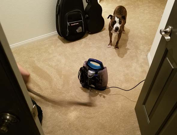 Cosette carpet cleaning